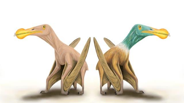 Hatten Pterosaurier ein Federkleid (rechts), oder waren sie kahl (links)?