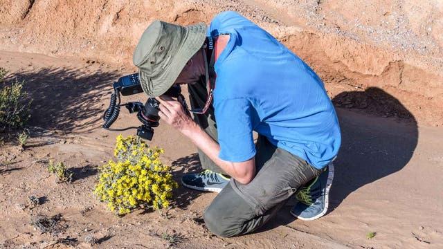 Martin Freiberg fotografiert eine Pflanze