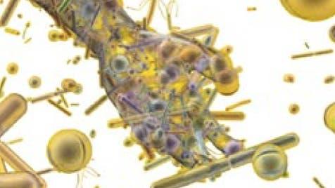 Im menschlichen Körper leben unzählige Mikroben