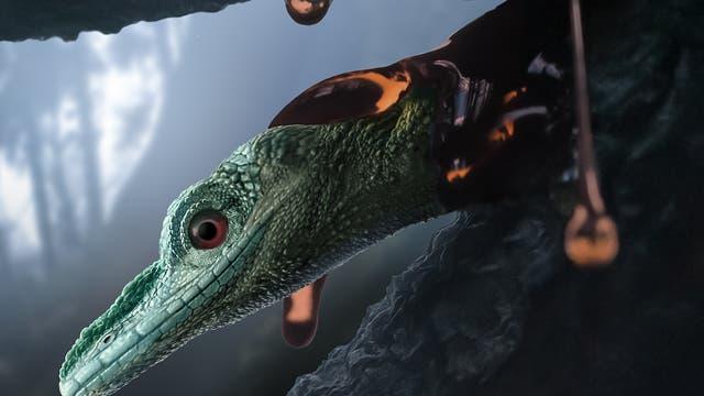 Das eingeschlossene Reptil Oculudentavis naga