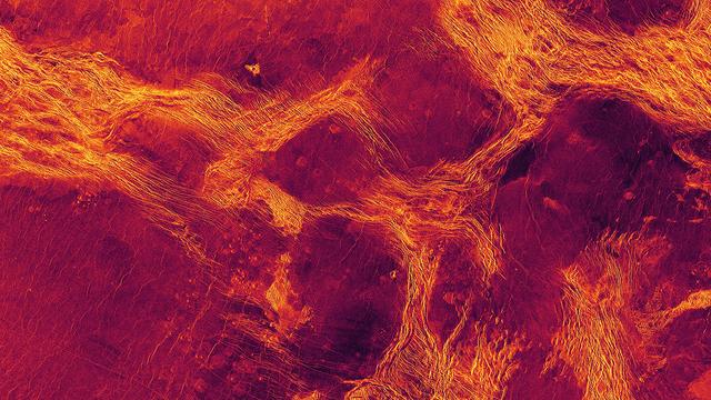 Schollen umgeben von tektonischen Strukturen (hier gelb) in der Kruste der Venus.
