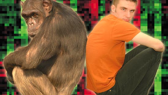 Schimpanse und Mensch