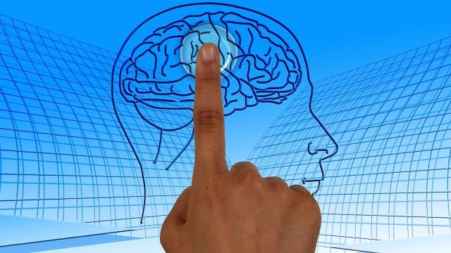 Schalter im Kopf: Neurobiologen erforschen den Insulin-Rezeptor im Gehirn