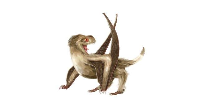 Kurzschwanz-Pterosaurier waren schon vorher sehr niedlich, schon wegen der großen Augen. Zum Kindchenschema kommt jetzt auch noch Ganzkörperflausch. Wenn es sie heute noch geben würde, wären sie wahrscheinlich beliebter ais Katzen (vorausgesetzt, sie wären stubenrein).