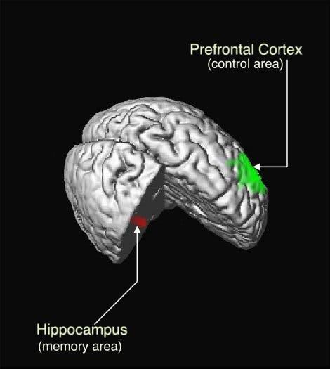 Hippokampus und präfrontaler Kortex