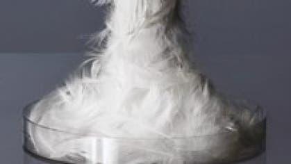 Kann ein künstlicher Vogelgrippeerreger bei einer Pandemie ähnlich viele Opfer fordern wie eine Atombombe?