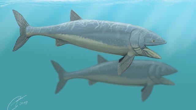 Leedsichthys problematicus