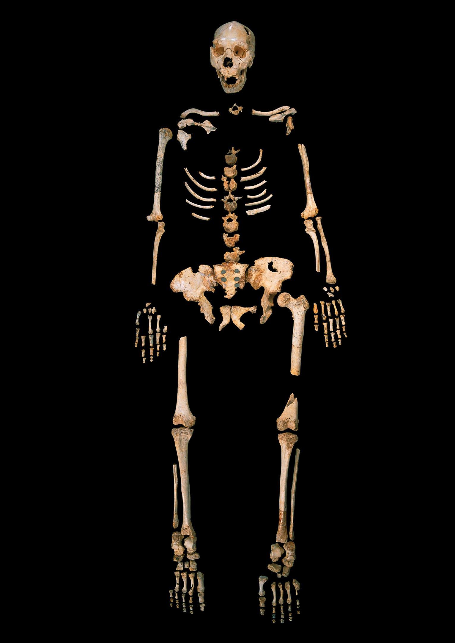 Homo heidelbergensis aus Sima de los Huesos