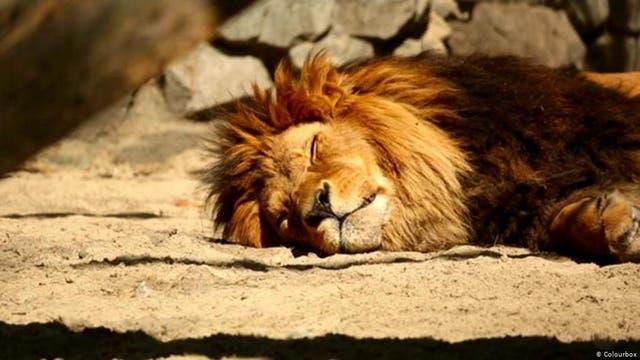 Schlafen alle Tiere?