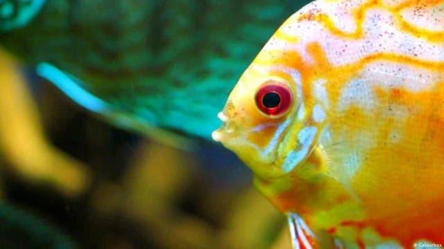Wie sehen Fische im Wasser?