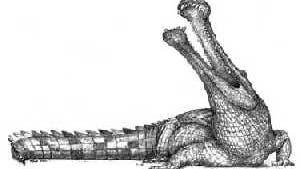 <i>Sarcosuchus imperator</i>