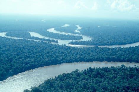 Der Nanay schlängelt sich durch peruanischen Regenwald