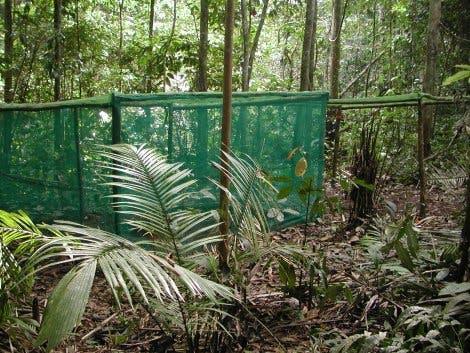 Vor Insektenfraß geschützte Bäume