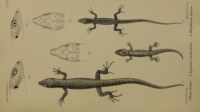 Reptilien von Christmas Island