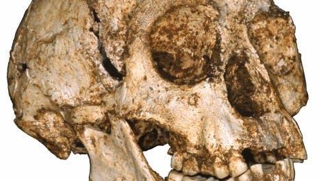 <i>Homo floresiensis</i>