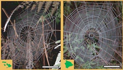 Spinnenetze