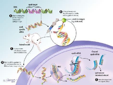 RNA-Interferenz