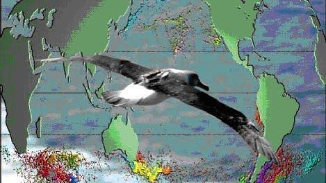 Hauptverbreitung gefährdeter Albatrosse und Sturmvögel