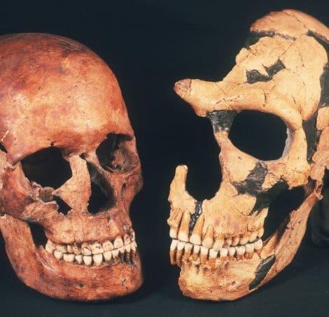 Cro-Magnon-Mensch und Neandertaler