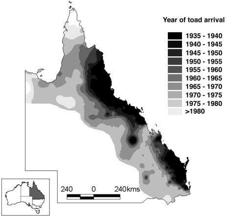 Ausbreitungskarte der Aga-Kröte