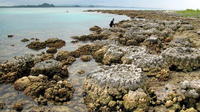 Angehobene Korallen an einem Strand der Insel Simeulue im Südwesten von Aceh, Indonesien. (Archivbild)