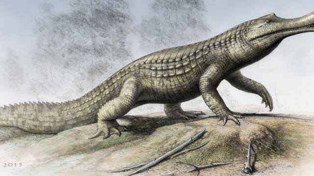 Sarcosuchus imperator - das Superkrokodil aus Afrika