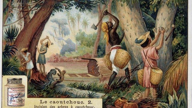 Die Gewinnung von wildem Kautschuk auf einem »Liebigbild« um 1910