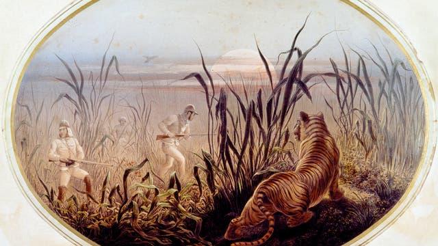 Symbolbild für eine Tigerjagd im 19. Jahrhundert.