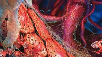 Gebändigte Blutgefäße