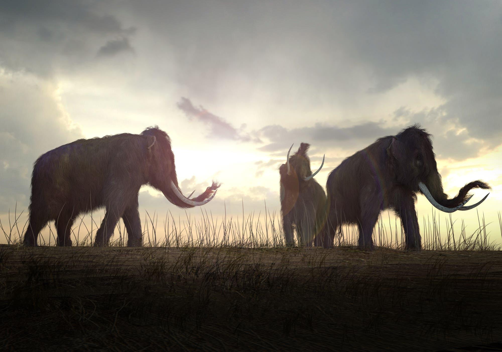 Mammuts vor der untergehenden Sonne