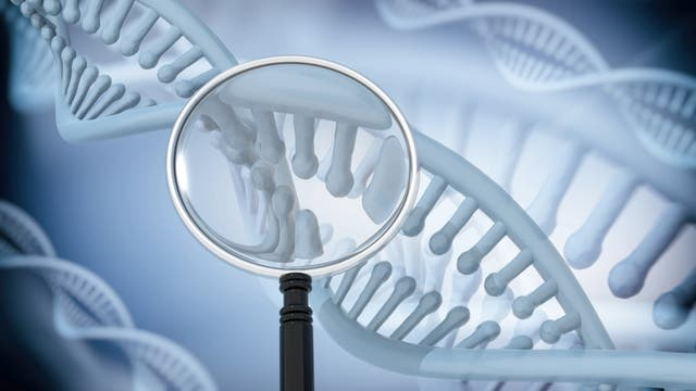 Eine stilisierte DNA-Helix unter einer stilisierten Lupe