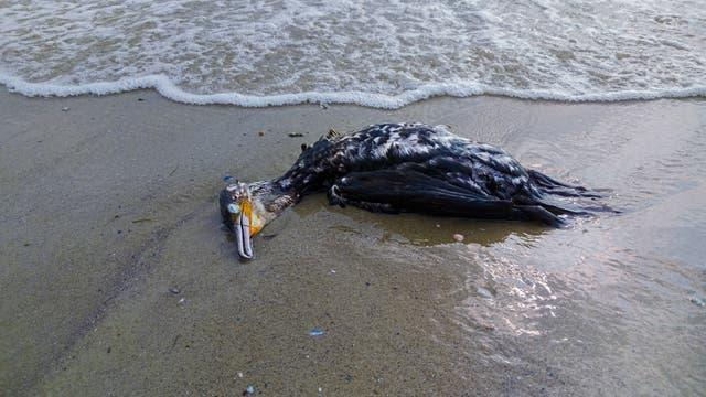 Toter Vogel auf einem Strand