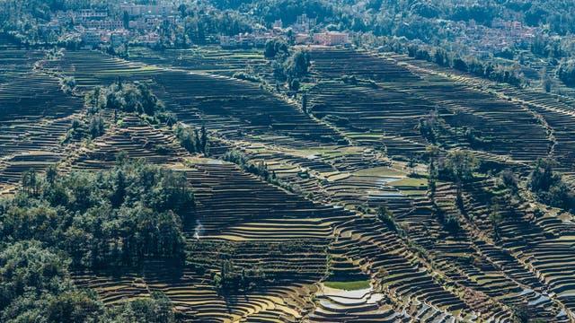 Reisterrassen in Honghe Hani, China