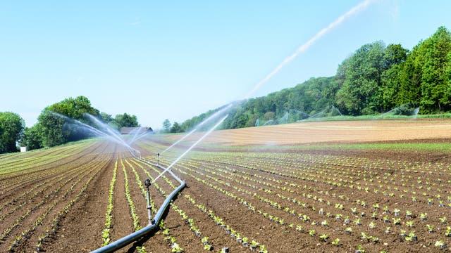 Ein frisch bepflanztes Gemüsefeld mit Bewässerungsanlagen