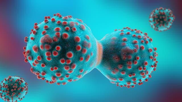 Krebszellen während der Mitose
