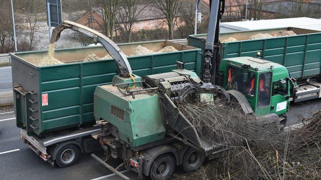 Ein Häcksler häckselt Äste eines Straßenbaums und spuckt Holzspäne auf die Ladefläche eines Lastwagens.