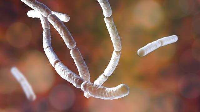 Bacillus subtilis (künstlerische Darstellung)
