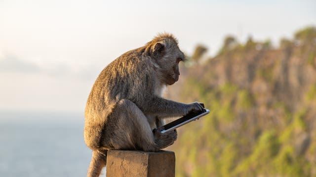 Affe auf Bali mit gestohlenem Smartphone