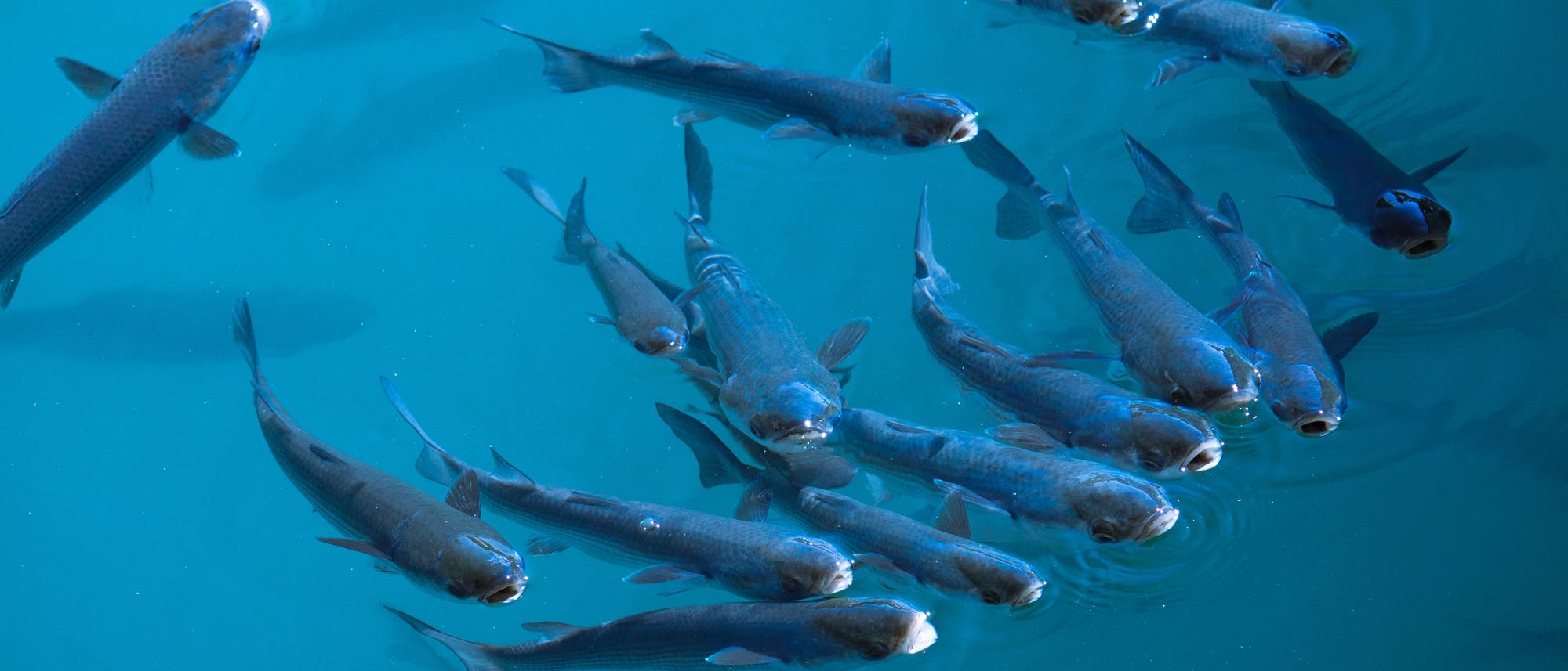 Fisch statt Fleisch