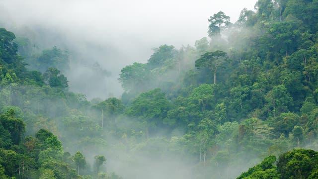 Regenwald im Morgennebel