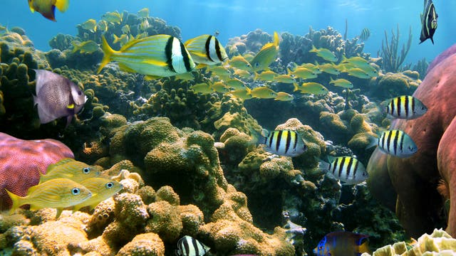 Buntes Leben im Riff
