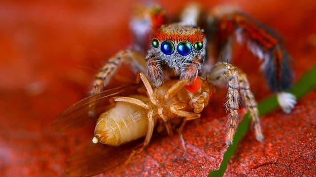 Spinne bei ihrer Lieblingsbeschäftigung