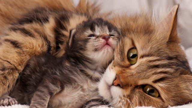 Babykatze mit Katzenmutter