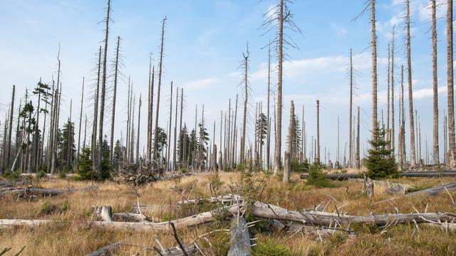 Tote Bäume im Bayerischen Wald