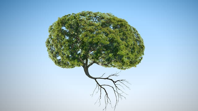 Ein hirnförmiger Baum schwebt in der Luft