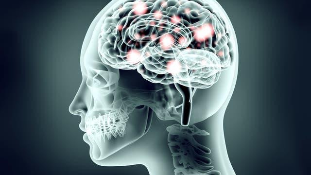 Das Gehirn unter Strom