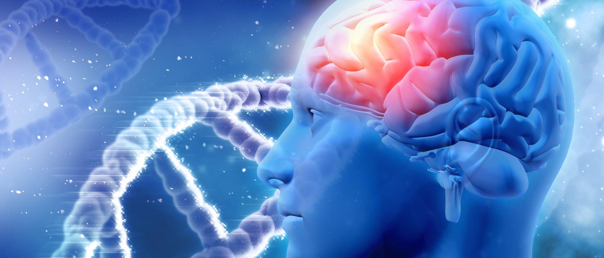 Gehirn und DNA