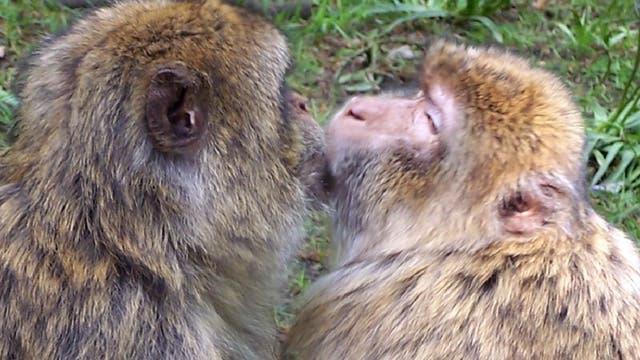2. Das Affenliteraturexperiment