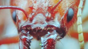 Wehrhafte Ameisen