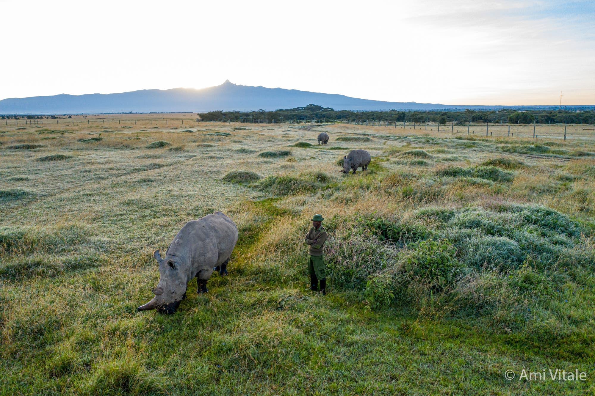 Nördliche und Südliche Breitmaulnashörner